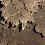 CaveCoral